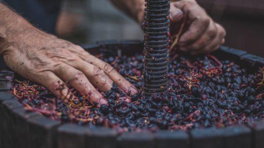 oficios relacionados con el vino