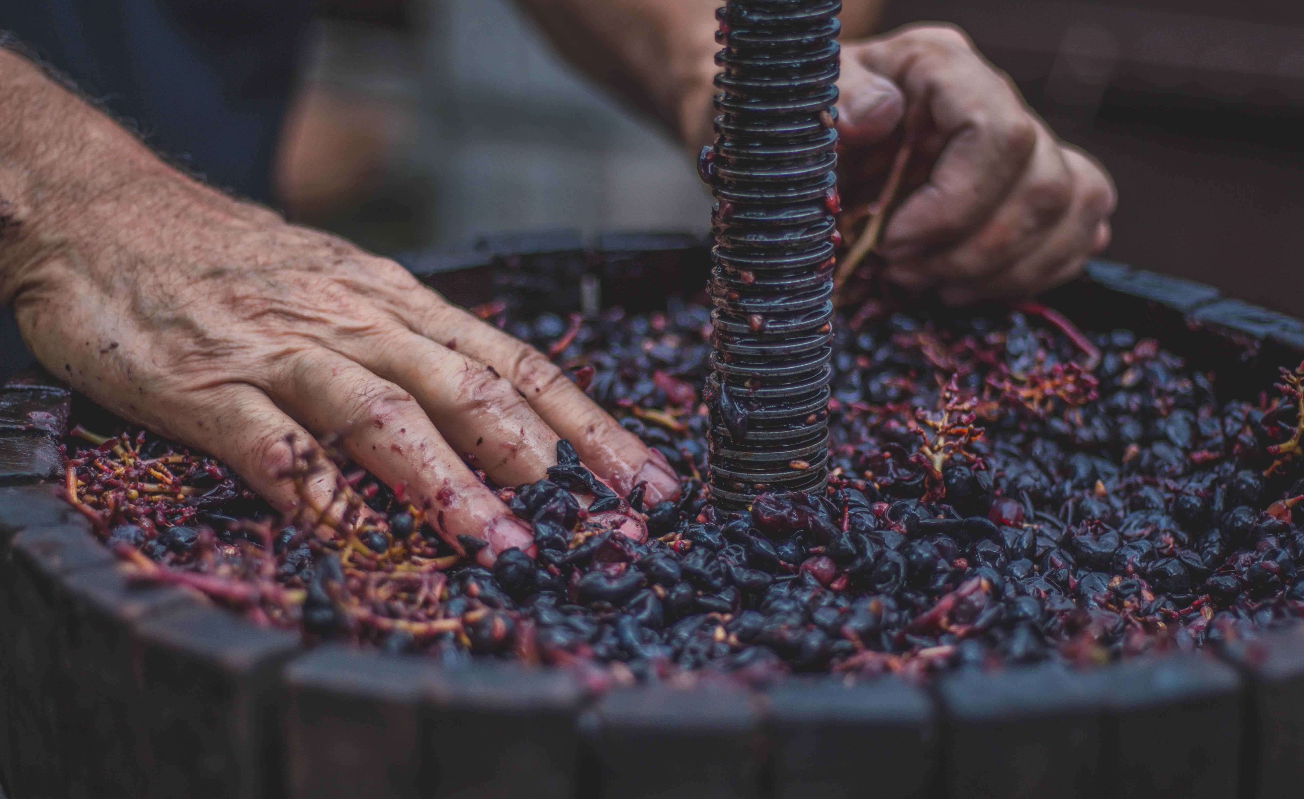 (Español) Descubre cuáles son todos los oficios relacionados con el vino