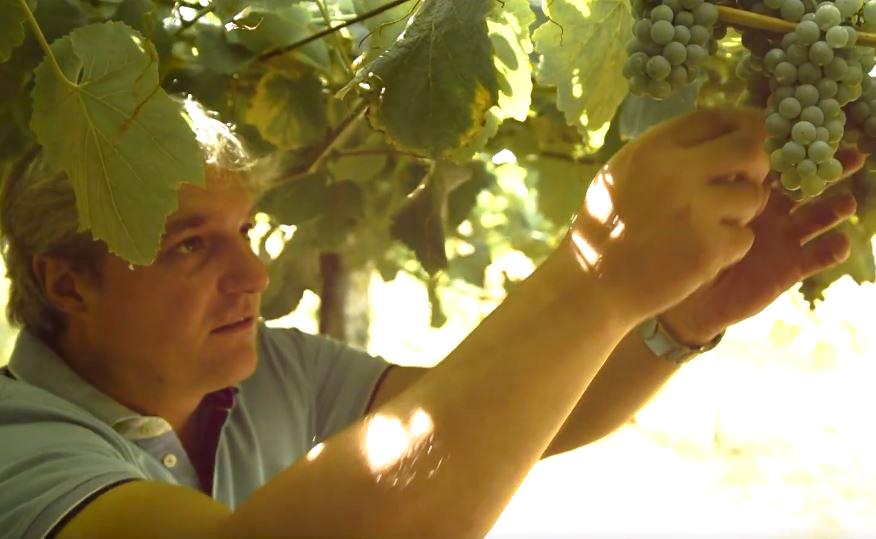 Nuestro enólogo Carlos Blanco y el respeto por la viticultura